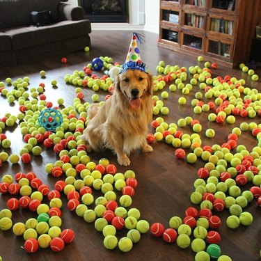 Dog in a party hat surrounded by tennis balls