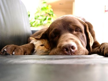 Cat and dog snoozing