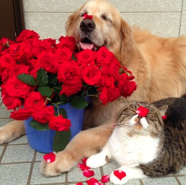 Cat and dog and roses