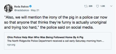 Affectionate pig wrangled into cop car for the funniest reason