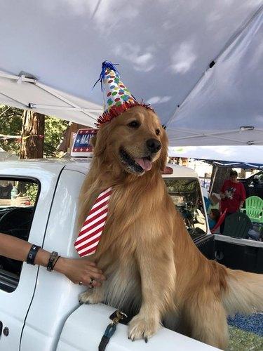 Dog Mayor Max in a birthday hat