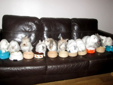 Eleven rabbits and their food bowls in a row