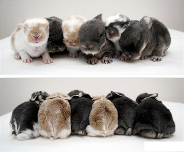 Front and back view of six baby bunnies