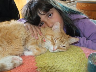 21 reasons why orange tabby cats are the best tabby cats