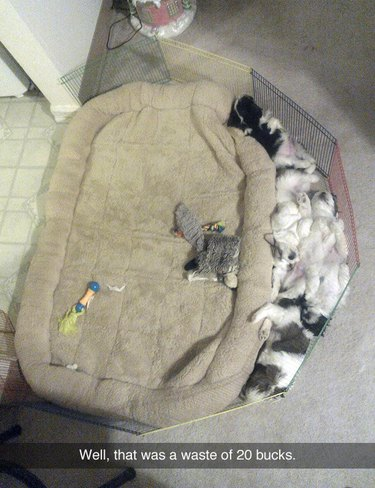 A pile of puppies sleeping on the floor next to a large bed