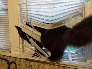 Cat in blinds