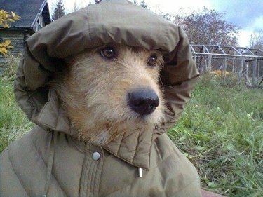 Dog in a jacket