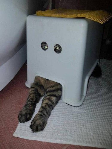 Cat hiding under plastic container and it has eye holes