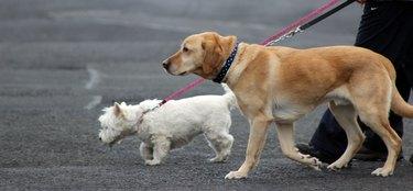Big dog and small dog walking outside