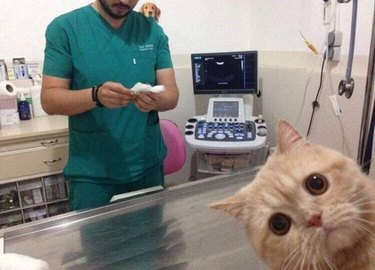 Betrayed cat at vet