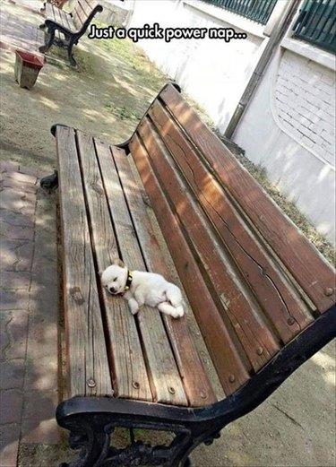 Tiny little puppy snoozing on a park bench