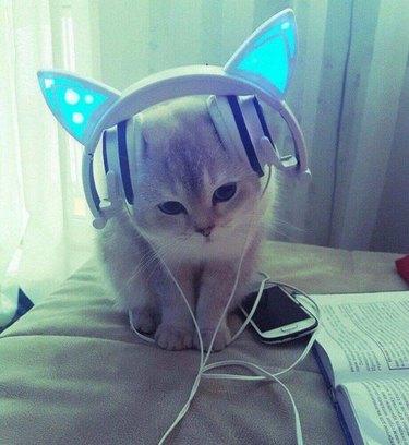 Kitten with cat ear headphones