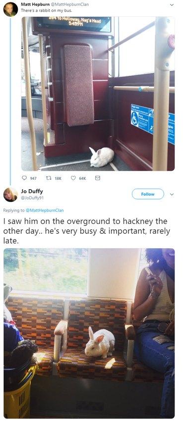 Rabbit on a bus
