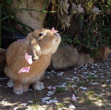 Rabbit covered in flower petals