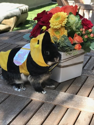 Rabbit dressed in a bumblebee costume