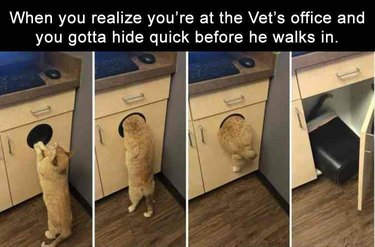 Cat hiding in garbage can at vet's