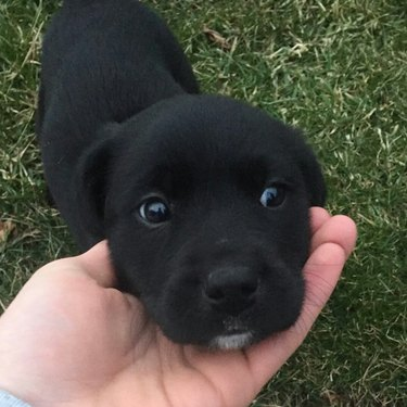 Cute puppy bored of being adored