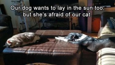 Dog trying to sit in the sunshine with a cat but the cat is scary