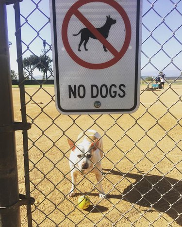 Dog plays fetch behind dogs prohibited sign