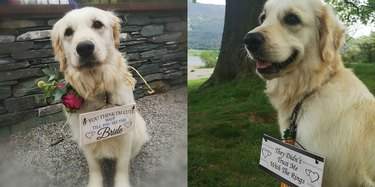 wedding dog poses with hilarious signs
