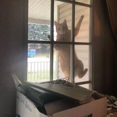 cat climbs screen door