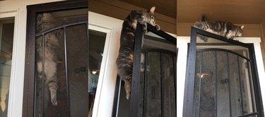 cat climbs to top of screen door