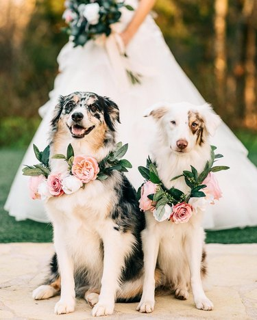 pups in flower crowns at wedding
