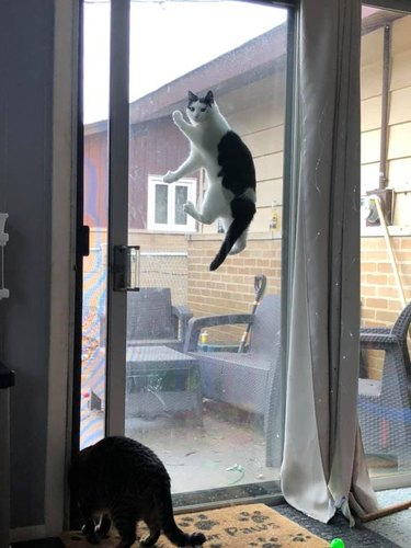 cat stuck between sliding door and screen door