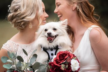 flower dog with newly married couple