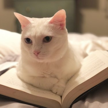 Cat resting on open book