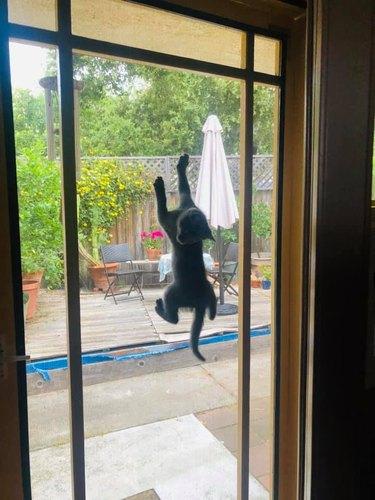 cat climbs up window screen