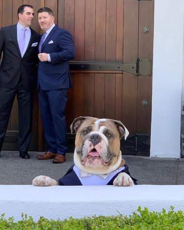 dog in tuxedo catches glimpse of bride at wedding