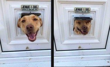 Dog with its head stuck in a cat door.