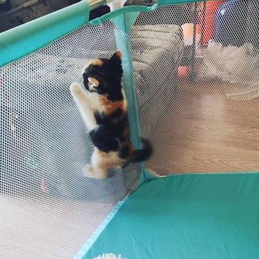 cat climbs mesh playpen