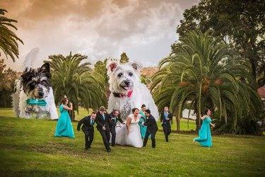 giant photoshopped dogs chase wedding party