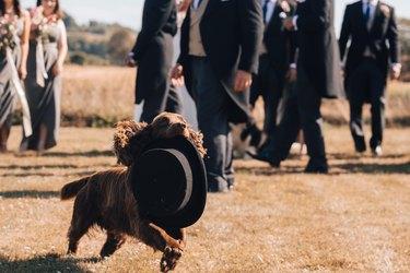 dog steals groom's hat at wedding