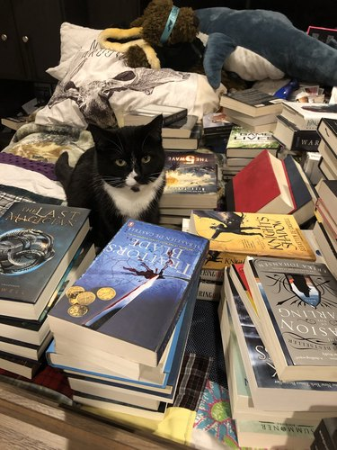 Cat sitting in a bunch of books
