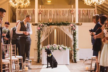 dog and best man stare intently at one another at wedding