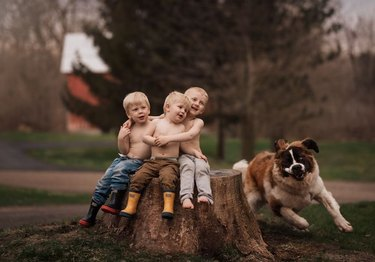 Family portrait of three young boys sitting on a tree stump while dog races around them