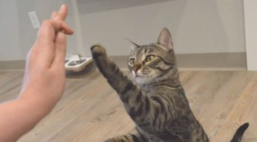 Jackson Galaxy is teaching shelter cats to high-five