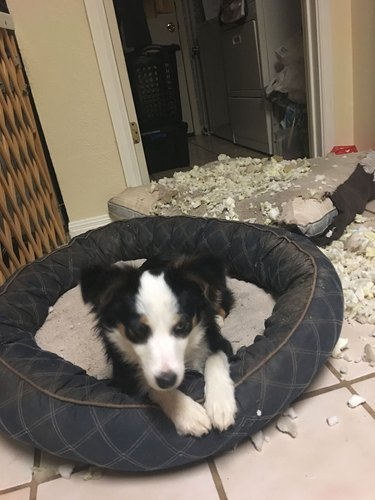 Guilty dogs doing guilty dog stuff
