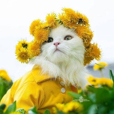 Cat wearing a flower crown.