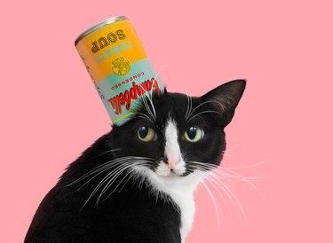 What's Art? / Princess Cheeto / Cat Art Show