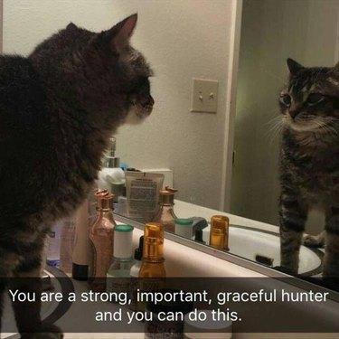 Cat looking in bathroom mirror