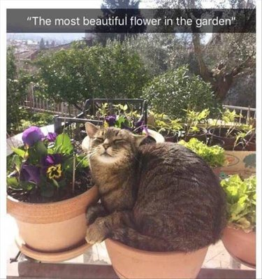 Cat snoozing in a flower pot