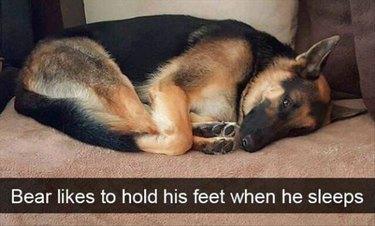 Dog holding his feet while he sleeps