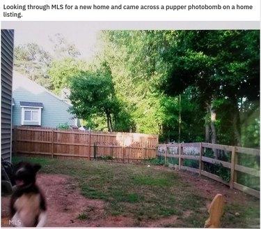 Dog photobombing picture of backyard.