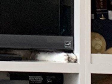 cat sleeps under tv