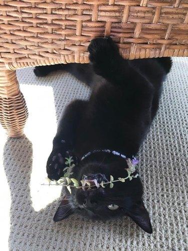 16 cats overdosing on the nip