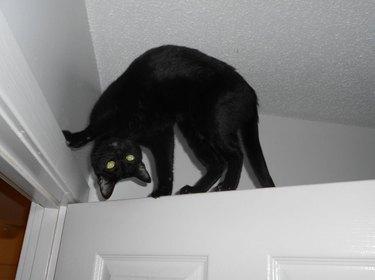 Cat being weird